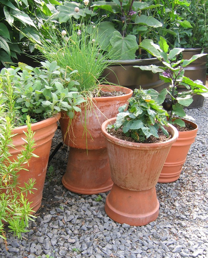 Terra Cotta Pots full of herbs and veggies