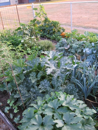 Squash and leek plants in a attractive vegetable garden.